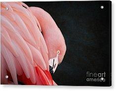 Exquisite Pink Flamingo #5 Acrylic Print