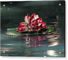 Acrylic Print featuring the photograph Exquisite Water Flower  by Lucinda Walter