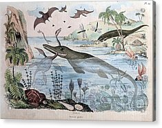 Extinct Animals, 1834 Engraving Acrylic Print
