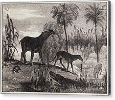 Extinct Prehistoric Animals, 1837 Acrylic Print