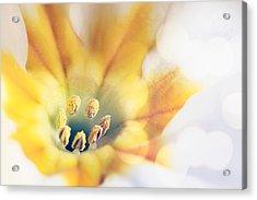 Extreme Close-up Of Flower Pollen Acrylic Print by Massimiliano Ranauro / EyeEm