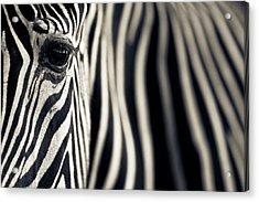 Eye & Stripes Acrylic Print