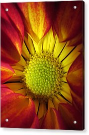 Eye Candy Acrylic Print