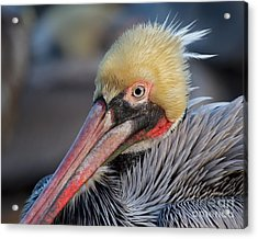 Acrylic Print featuring the photograph Eye Contact by Dale Nelson
