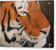 Eye Of A Tiger Acrylic Print by Michael Hall