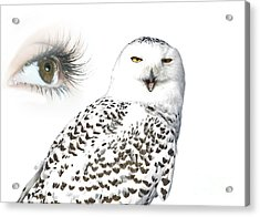 Eye Of Purity And The Mysterious Snowy Owl  Acrylic Print by Inspired Nature Photography Fine Art Photography