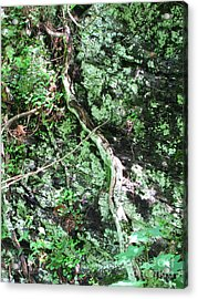 Eye Of Root Acrylic Print by Melissa Stoudt