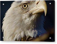 Eye Of The Eagle Acrylic Print by Greg Vizzi