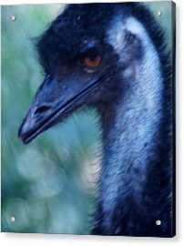 Eye Of The Emu Acrylic Print by DerekTXFactor Creative