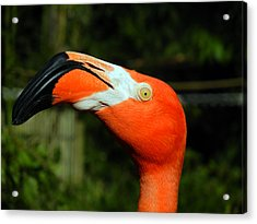 Acrylic Print featuring the photograph Eye Of The Flamingo by Bill Swartwout