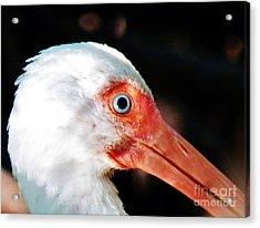 Eye Of The Ibis Acrylic Print by Judy Via-Wolff