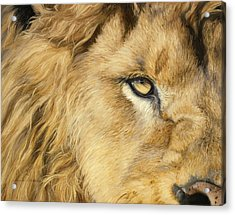 Eye Of The Lion Acrylic Print by Lucie Bilodeau