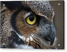 Eye Of The Owl Acrylic Print by Craig Brown