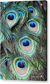 Acrylic Print featuring the photograph Eye Of The Peacock #2 by Judy Whitton