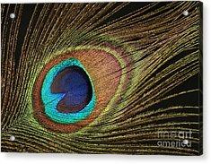 Eye Of The Peacock #5 Acrylic Print