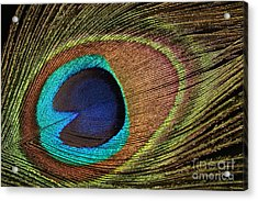 Eye Of The Peacock Acrylic Print by Judy Whitton