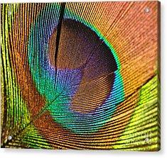Eye Of The Peacock Acrylic Print
