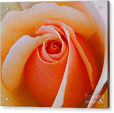Eye Of The Rose Acrylic Print by Nick  Boren