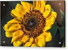 Eye Of The Sun Acrylic Print by Michael Moriarty