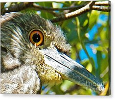 Eye On You Acrylic Print by Judy Via-Wolff
