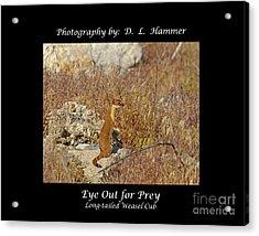 Eye Out For Prey Acrylic Print by Dennis Hammer
