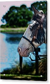 Eye See You Acrylic Print by Frank Feliciano