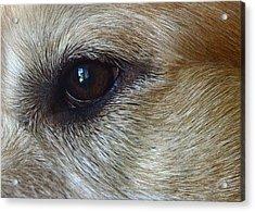 Eye See You Acrylic Print by Lisa Phillips