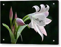 Eyelash Lily Acrylic Print