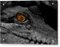 Eyes For You Acrylic Print by Andrew Prince
