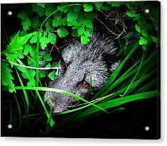Eyes In The Bushes Acrylic Print