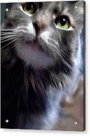 Eyes Nose Mouth Whiskers Acrylic Print