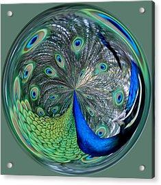 Eyes Of A Peacock Acrylic Print by Cynthia Guinn