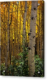 Acrylic Print featuring the photograph Eyes Of The Forest by Ken Smith
