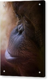 Eyes Acrylic Print by Shane Holsclaw