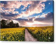 Eynsford Fields Acrylic Print