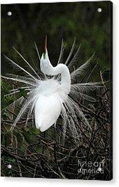 Fabulous Feathers Acrylic Print