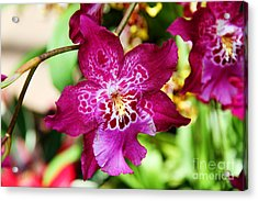 Fabulous Fushia Orchids By Diana Sainz Acrylic Print