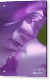 Face In A Glad  Acrylic Print by Steve Augustin