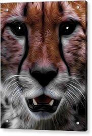 Face Of The Cheetah Acrylic Print
