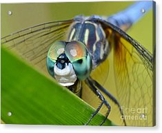 Acrylic Print featuring the photograph Face Of The Dragonfly by Kathy Baccari