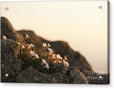 Face The Light Acrylic Print by Anne Gilbert