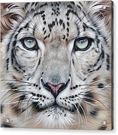 Faces Of The Wild - Snow Leopard Acrylic Print by Elena Kolotusha