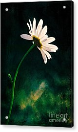 Facing The Sun Acrylic Print