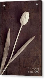 Faded Memories Single White Tulip Acrylic Print by Edward Fielding