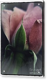 Acrylic Print featuring the photograph Faded Rose by Lori Mellen-Pagliaro