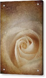 Faded Rose Acrylic Print