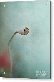 faded summer I Acrylic Print by Priska Wettstein