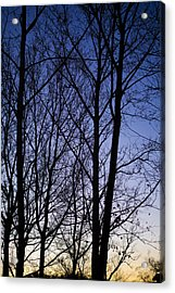 Acrylic Print featuring the photograph Fading Light Through The Sycamore Trees by Micah Goff