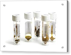 Faecal Samples For Analysis Acrylic Print by Aberration Films Ltd