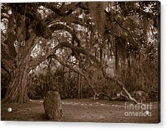 Fairchild Oak Acrylic Print
